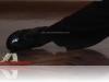 ZapatospBailarDandyPro003